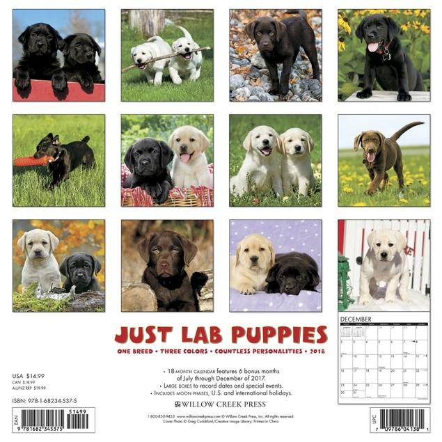 Just Lab Puppies Wall Calendar, Labrador Retriever by Calendars