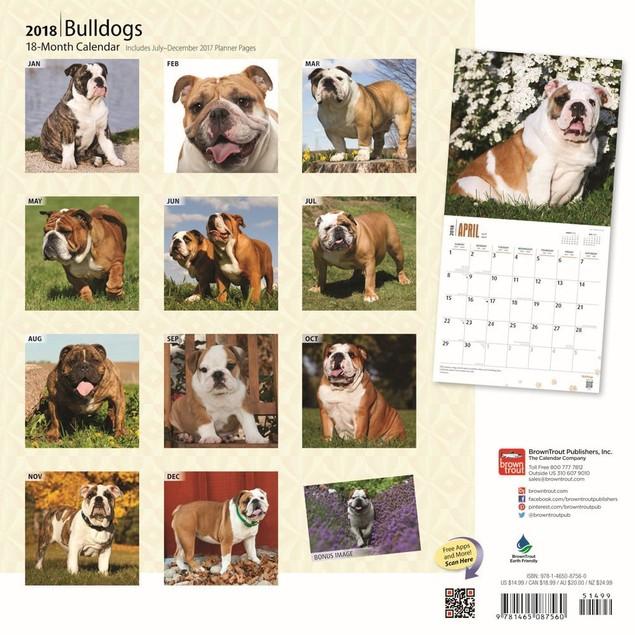 Bulldogs Deluxe Wall Calendar, Bulldog by Calendars