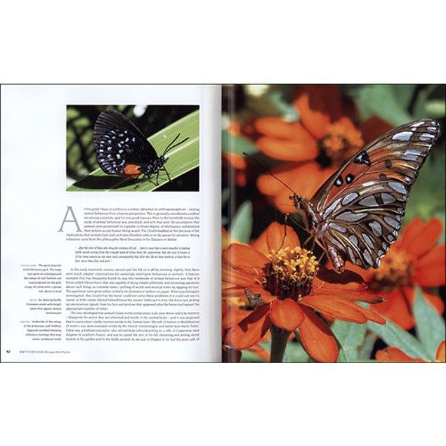 Butterflies: Decoding Their Signs and Symbols Book, Butterfly | Insects by