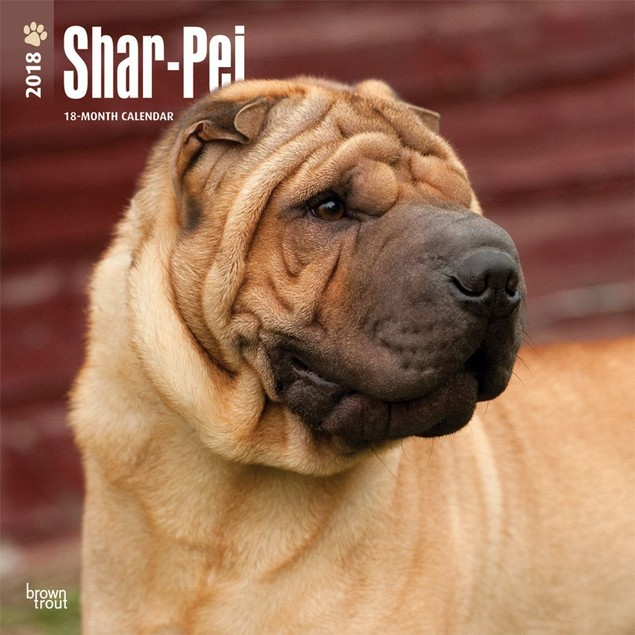 Shar-Pei Wall Calendar, Shar-Pei by Calendars