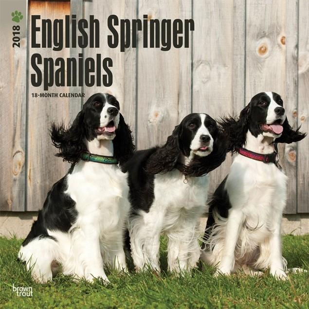 English Springer Spaniels Wall Calendar, English Springer Spaniel by Calend