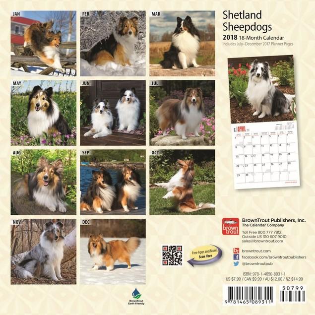 Shetland Sheepdog Puppies Mini Wall Calendar