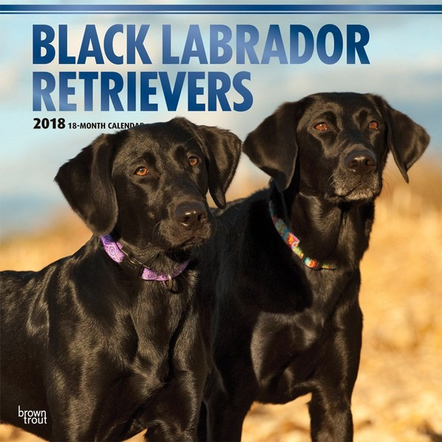 Lab Retriever Black Wall Calendar, Black Lab by Calendars