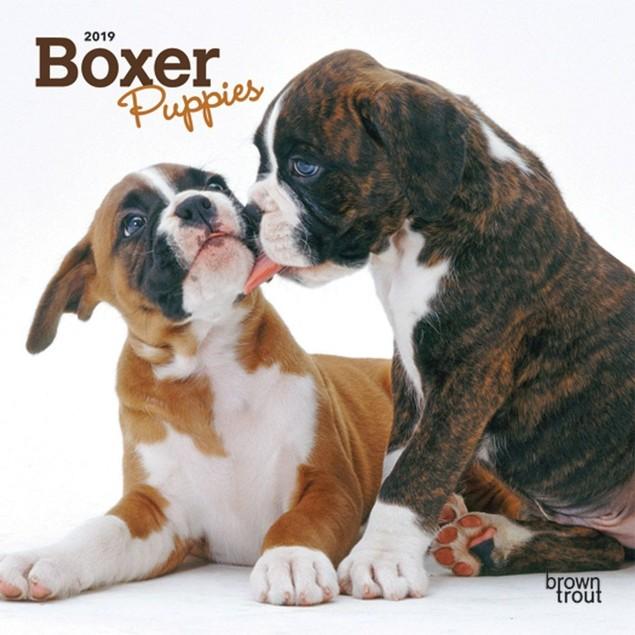 Boxer Puppies Mini Wall Calendar, Boxer by Calendars