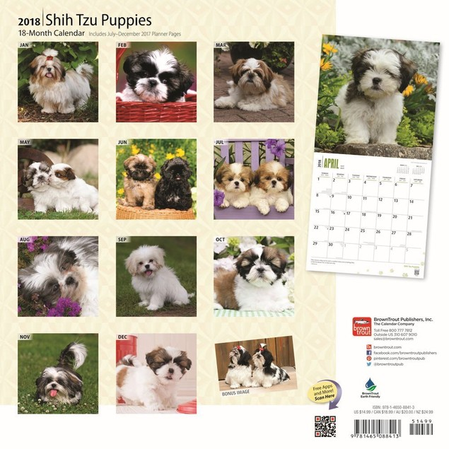 Shih Tzu Puppies Wall Calendar, Shih Tzu by Calendars