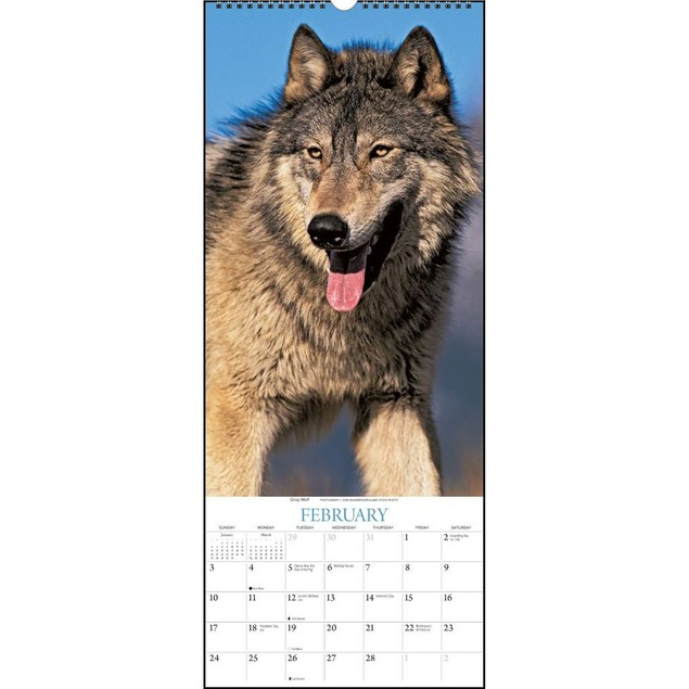 Wolves  Wall Calendar, Wolves by Calendars