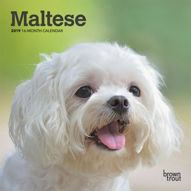 Maltese Mini Wall Calendar, Maltese by Calendars