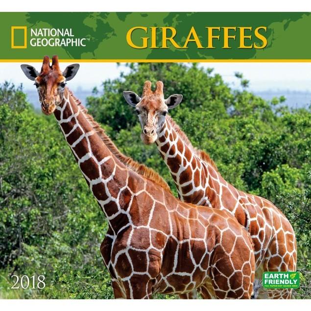 Giraffes NG Wall Calendar, Wildlife by Calendars