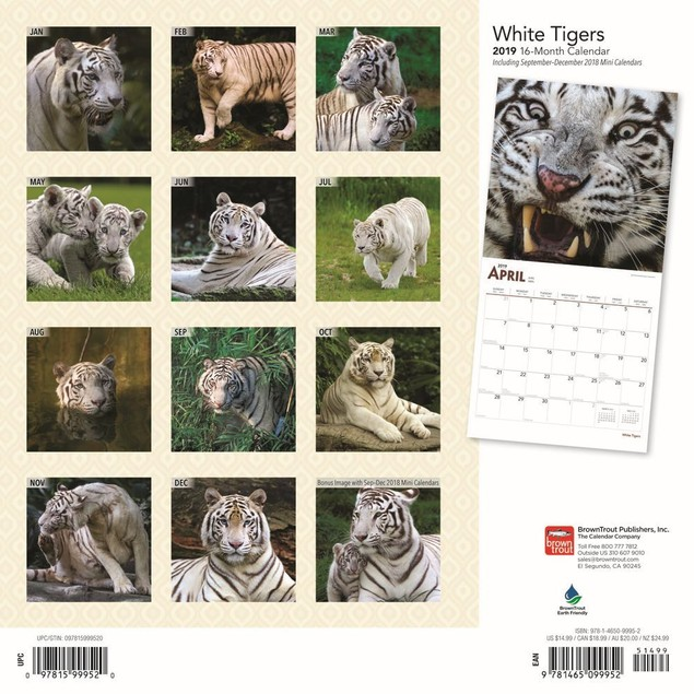 Tigers White Wall Calendar, Big Cats by Calendars