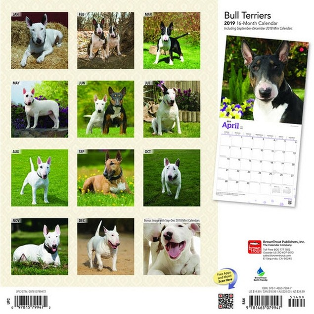 Bull Terriers Wall Calendar, Bull Terrier by Calendars