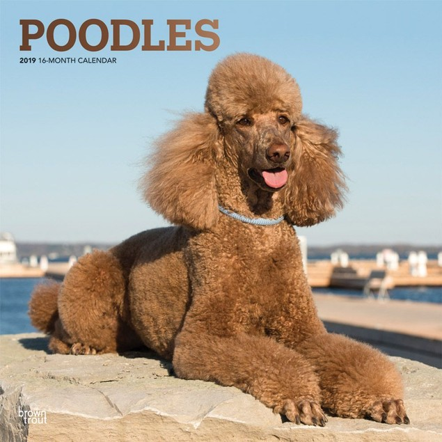 Poodles Wall Calendar, Poodle by Calendars