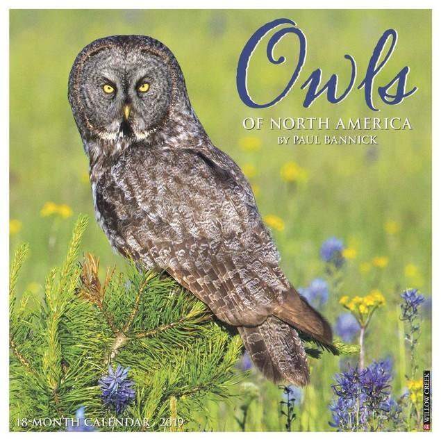 Owls Wall Calendar, Birds by Willow Creek Press