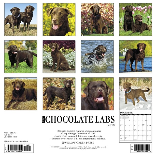 Just Chocolate Labs Wall Calendar, Chocolate Lab by Calendars