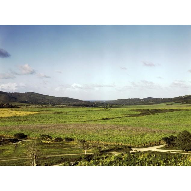 Puerto Rico: Farm, 1941. /Nsugarcane Plantations In Yabucoa Valley, Puerto