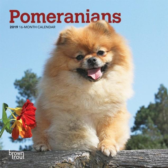 Pomeranian Mini Calendar, Pomeranian by Calendars