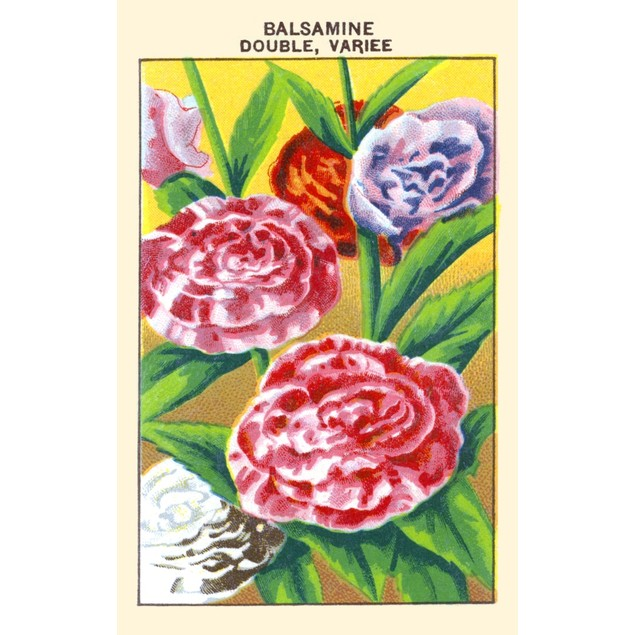 Double Balsam Poster
