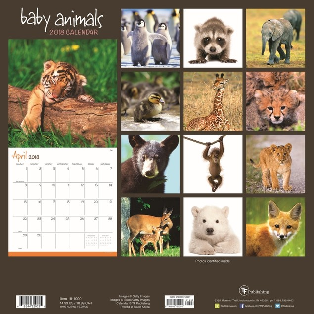 Baby Animals Wall Calendar, Baby Animals by Gifted Stationery Co