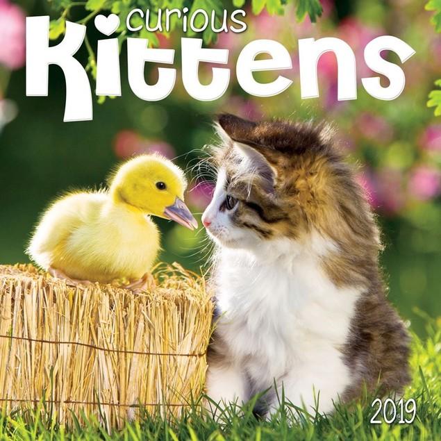Kittens Curious Wall Calendar, Kittens by Calendars