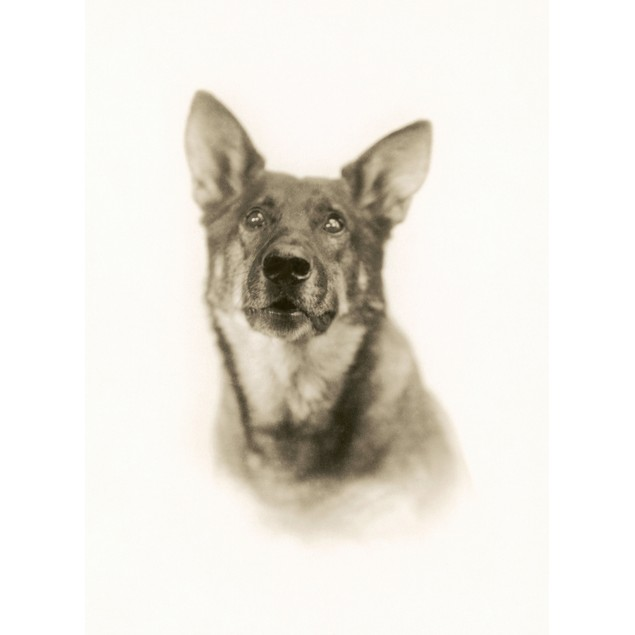 Rin-Tin-Tin (1916-1932). /Namerican Canine Actor. Photographed In 1926. Pos