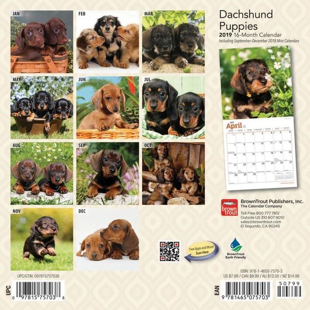 Dachshund Puppies Mini Calendar, Dachshund by Calendars
