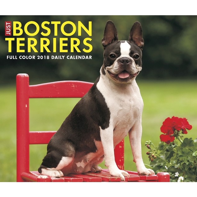 Just Boston Terriers Desk Calendar, Boston Terrier by Calendars