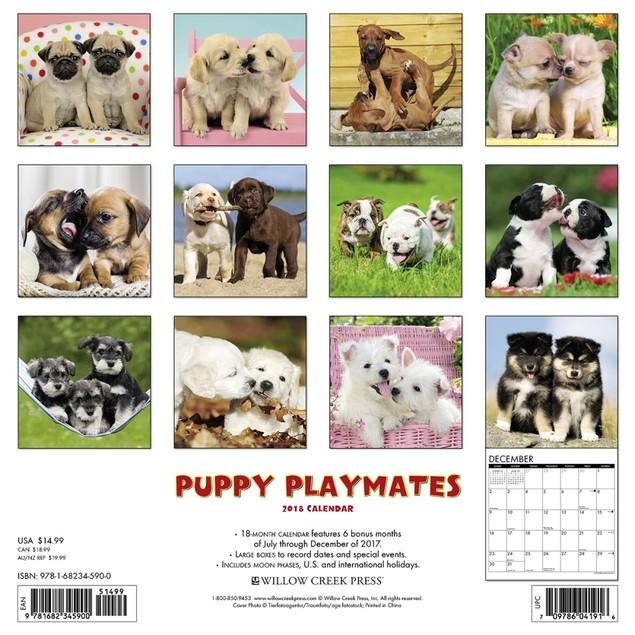Puppy Playmates Wall Calendar, Cute Puppies by Calendars