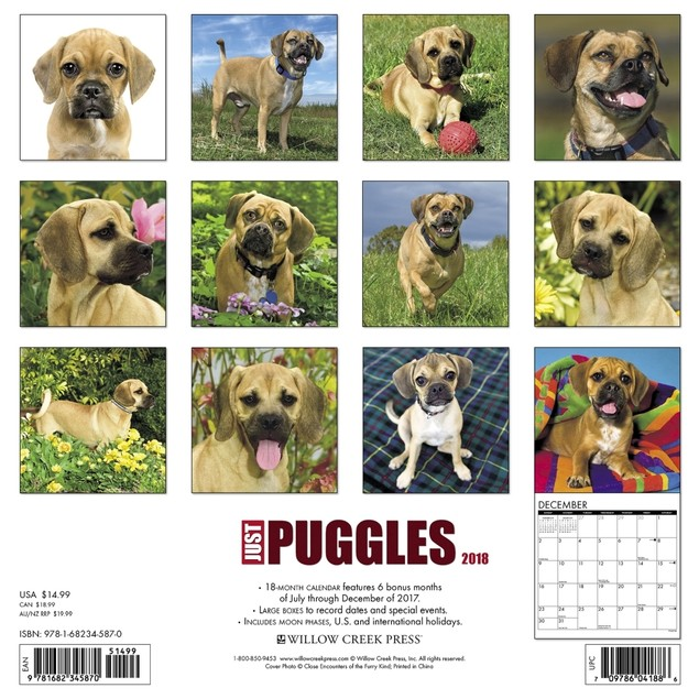 Just Puggles Wall Calendar, Puggle by Calendars