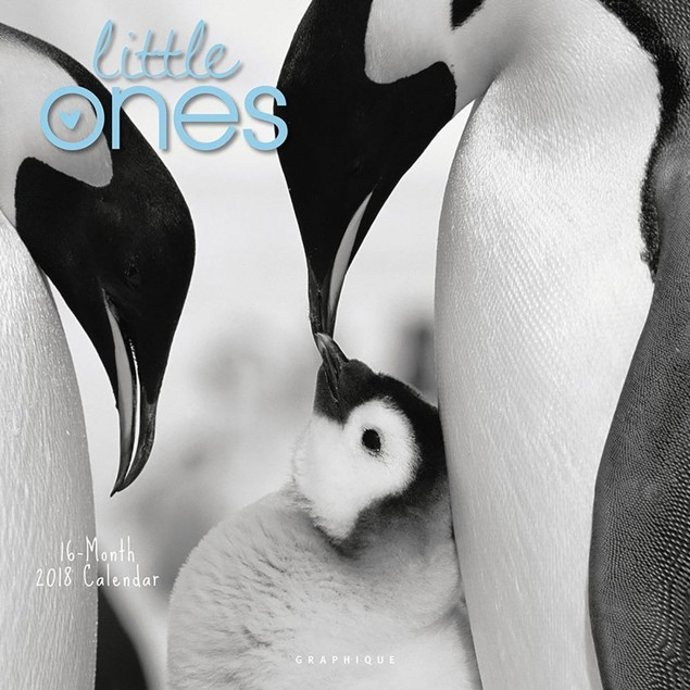 Little Ones Wall Calendar, Baby Animals by Graphique De France
