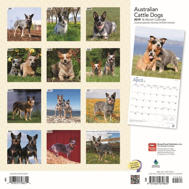 Australian Cattle Dogs Wall Calendar, Australian Cattle Dog by Calendars