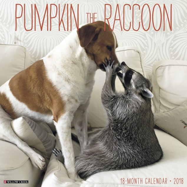 Pumpkin the Raccoon Wall Calendar, Wildlife by Willow Creek Press