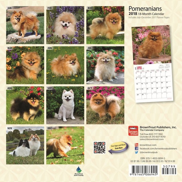 Pomeranian Mini Calendar, Pomeranian by Calendars