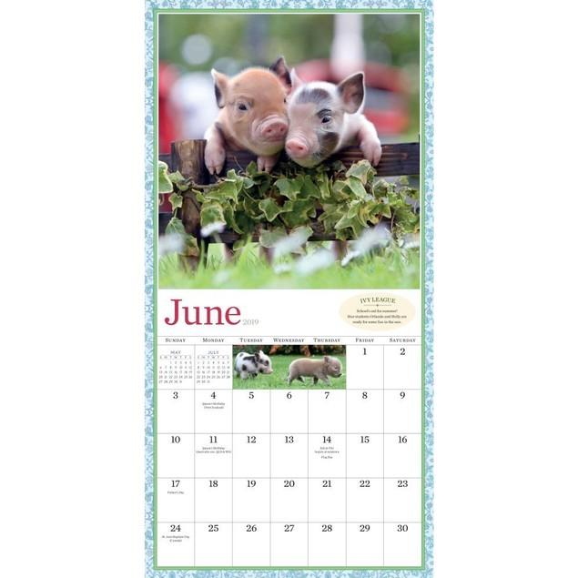 Pocket Pigs Wall Calendar, Pigs by Calendars
