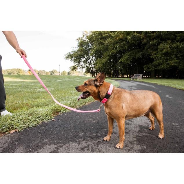 Pet Life 'Aero Mesh' 2-In-1 Breathable Adjustable Mesh Dog Leash-Collar