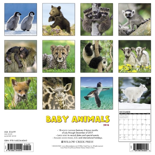 Baby Animals Wall Calendar, Baby Animals by TF Publishing