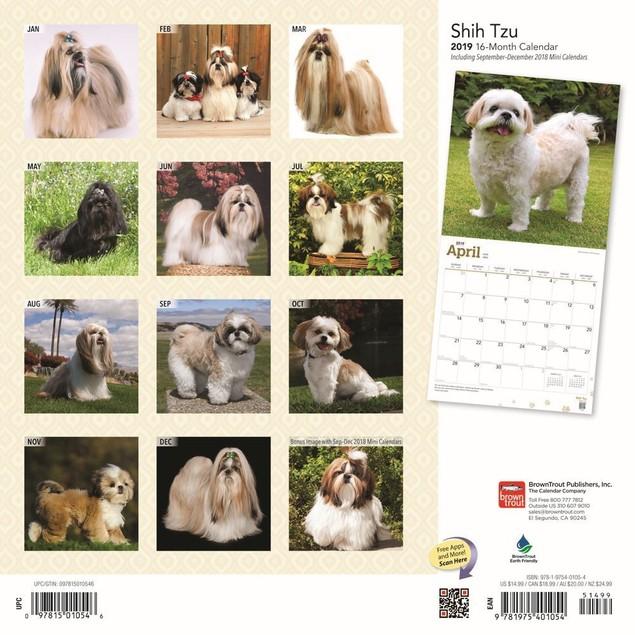 Shih Tzu Wall Calendar, Shih Tzu by Calendars