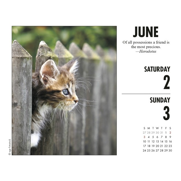What Cats Teach Us Desk Calendar, Assorted Cats by Calendars