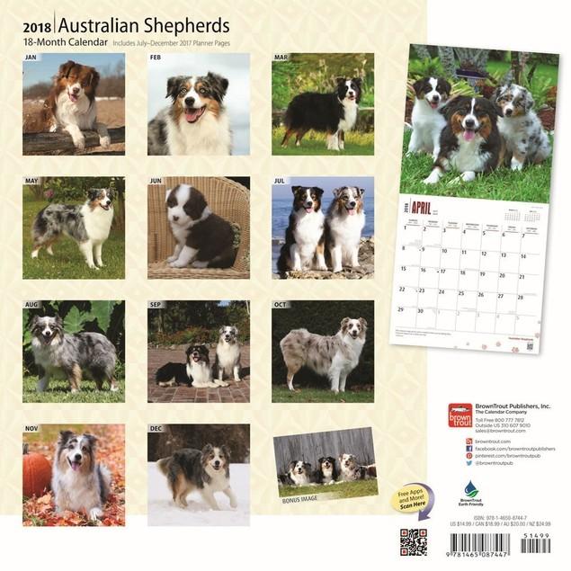 Australian Shepherds Wall Calendar, Australian Shepherd by Calendars