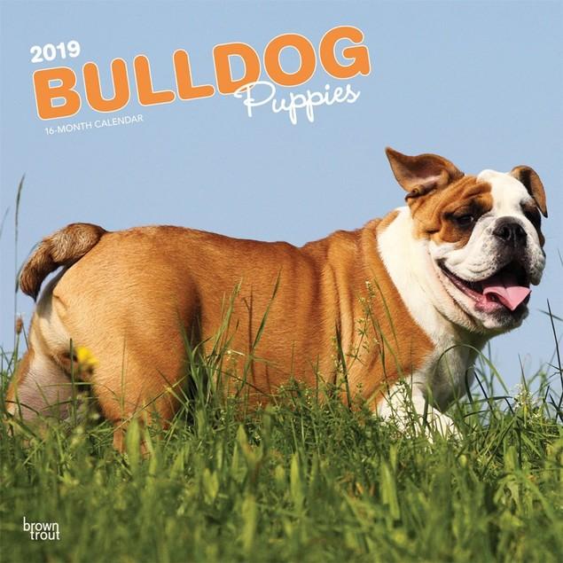 Bulldog Puppies Wall Calendar, Bulldog by Calendars