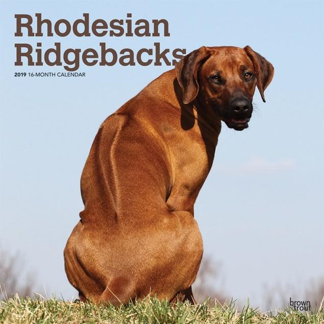 Rhodesian Ridgebacks Wall Calendar, Rhodesian Ridgeback by Calendars