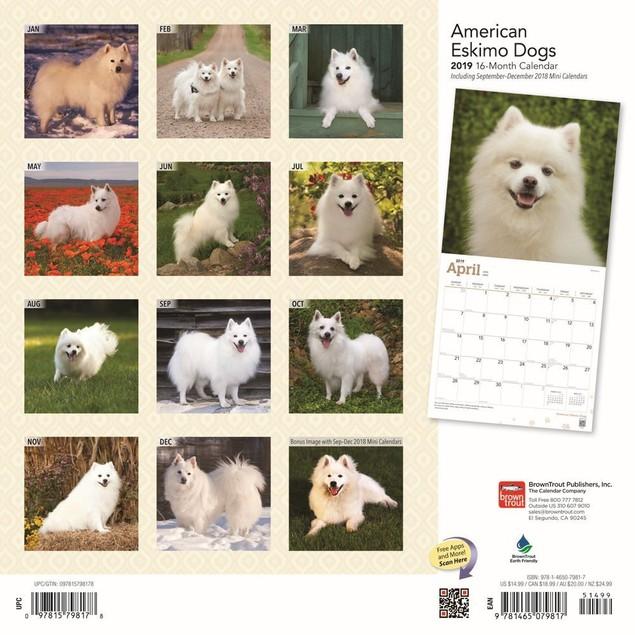 American Eskimo Dogs Wall Calendar, American Eskimo Dog by Calendars