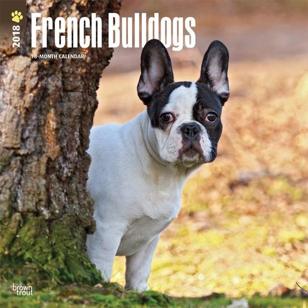 French Bulldogs Wall Calendar, French Bulldog by Calendars