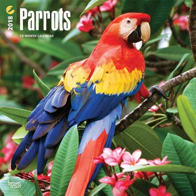 Parrots Wall Calendar, Birds by Calendars