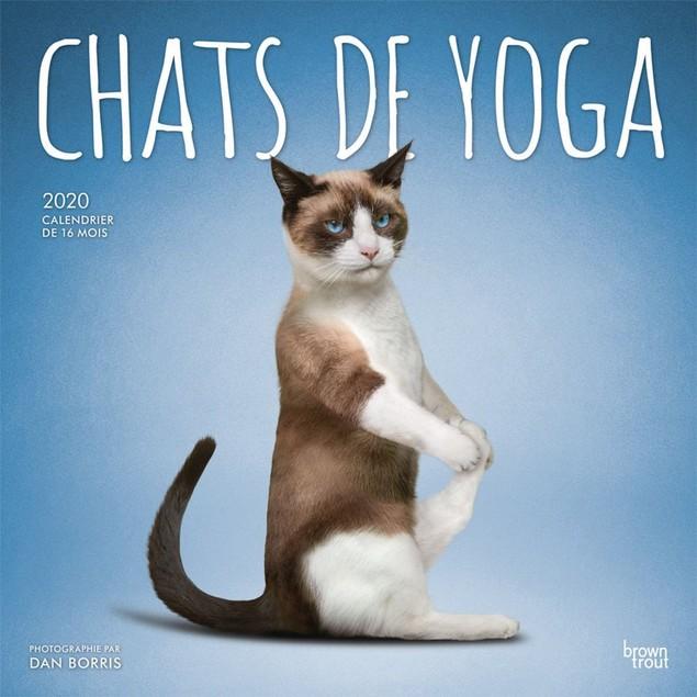 Yoga Cats Wall Calendar, Funny Cats by Calendars