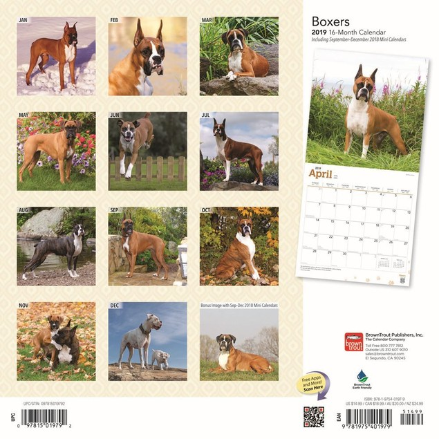 Boxers Wall Calendar, Boxer by Calendars