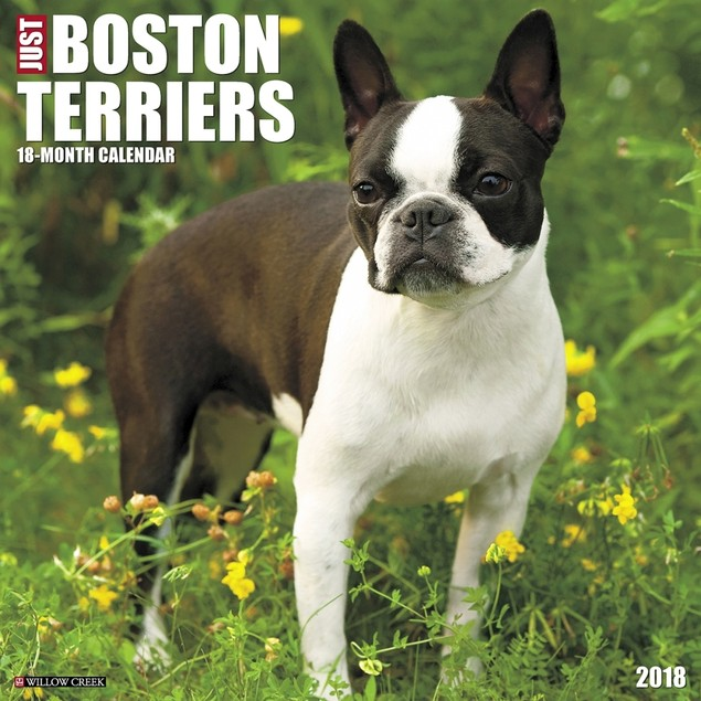Just Boston Terriers Wall Calendar, Boston Terrier by Calendars