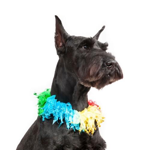 Midlee Rainbow Decorative Dog Collar