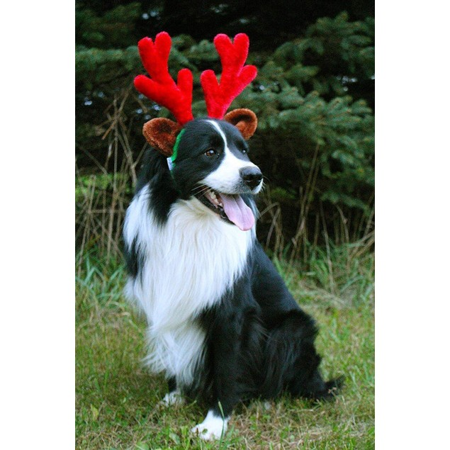 Midlee Christmas Reindeer Antlers with Ears for Large Dogs