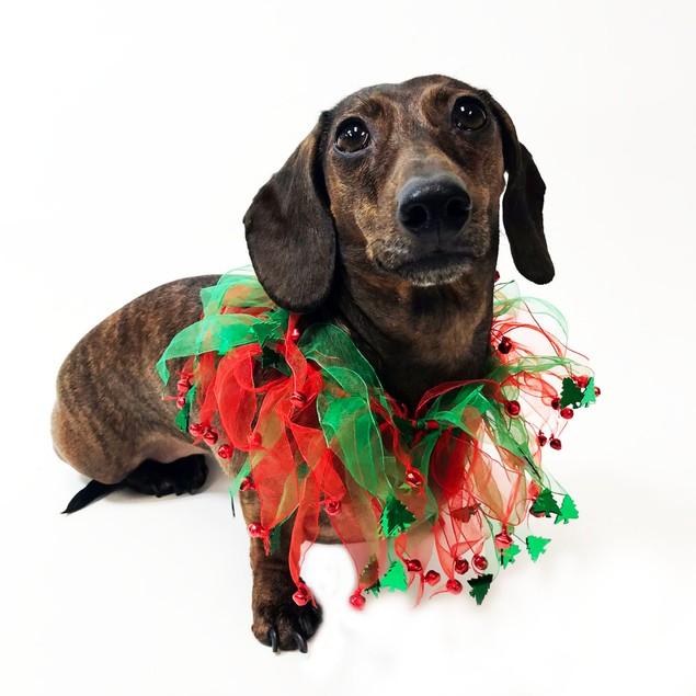 Midlee Jingle Bells and Christmas Trees Decorative Dog Collar