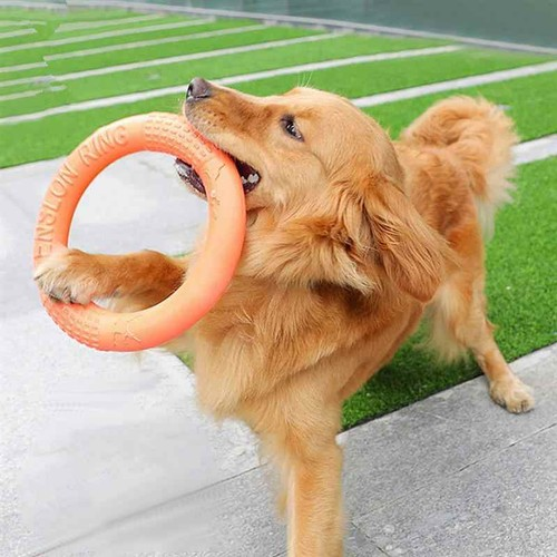 Dog Ring Toy