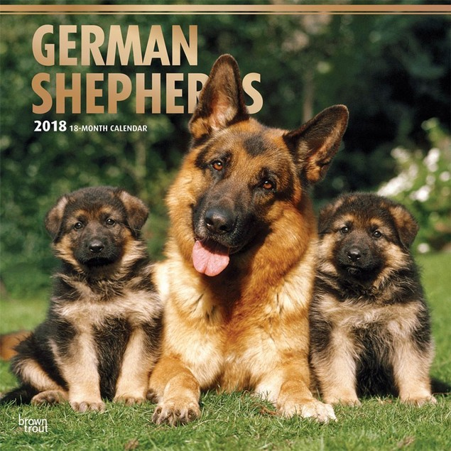 German Shepherds Wall Calendar, German Shepherd by Calendars
